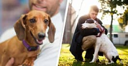 Men With Dogs In Dating App Photos Want A Specific Type Of Relationship, According To Experts