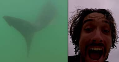 Nutcase Surfer Pursues Great White Shark With His GoPro