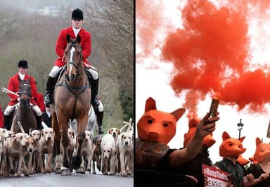 Fox Hunting Debate Delayed After SNP Forces David Cameron Rethink