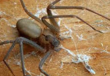 Student Fighting For Life After Being Bitten By 'World's Deadliest' Spider