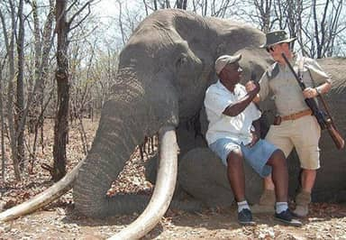Biggest Elephant In Africa To Be Killed In 30 Years Shot By Hunter