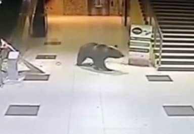 Bear Forces Its Way In And Out Of Shopping Centre Before Being Shot