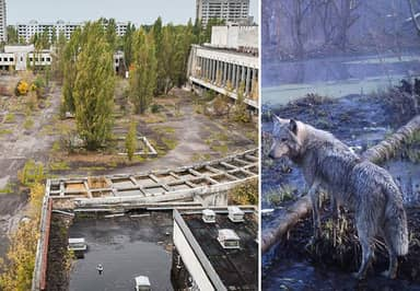These Incredible Images Show Animals Thriving In Human Disaster Zones