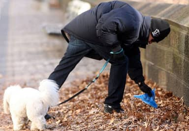 Dog Walkers Face Fines Of Up To £1000 For Not Carrying Plastic Bags