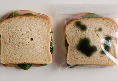 How Mouldy Is Too Mouldy To Eat? Science Has The Answer