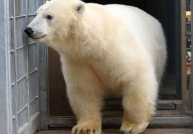 Migrants Break Into Lorry In Calais, Confronted By A Polar Bear In Transit