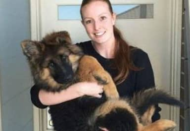 Series Of Photos Chart German Shepherd Puppy's Insane Growth Over Six Months