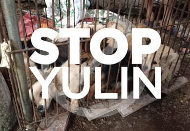 Thousands Of Dogs Are Still Being Butchered At Yulin, Despite The Dog Meat Ban