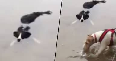 'New Species Of Crocodile' Discovered As Dog Plays In Water