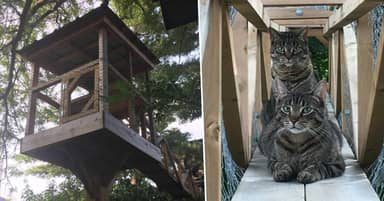 Dad Builds Treehouse For Cats So They Can Always Be Safe