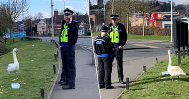 Hot Fuzz Becomes Reality As Police 'Call Backup' Over Escaped Swan