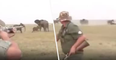 Elephants Chase Scared Hunter Away After He Shoots Dead One Of The Herd
