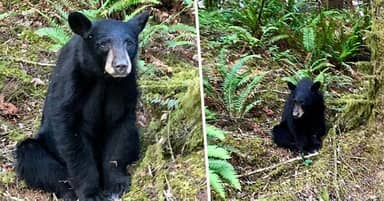 Young Bear Shot Dead By Wildlife Officials After People Feed Him To Take Selfies
