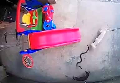 Heroic Dog Gives Her Own Life To Save Sleeping Toddler From Cobra