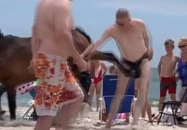 Guy In Speedos Kicked In The Balls By Wild Horse At Beach