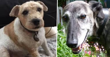 Oldies Club Rehomes Older Dogs Because They're Just As Perfect To Adopt As Puppies