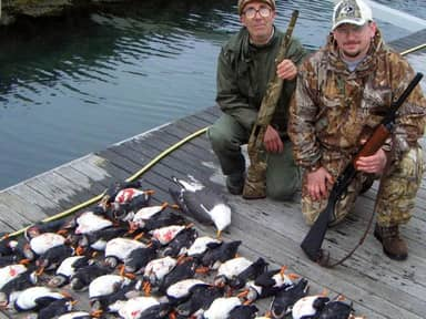 Puffins Are Endangered Of Becoming Extinct Due To Trophy Hunters