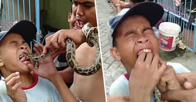 Boy Taunts Snake By Sticking Out His Tongue And Instantly Regrets It
