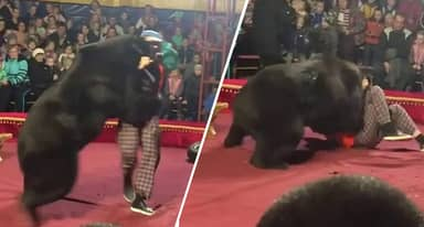 Terrifying Moment Bear Attacks Circus Trainer After Being Made To Act Like A Human