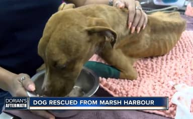 Starving Puppy Found In Rubble Month After Hurricane Dorian Wags His Tail When Rescued