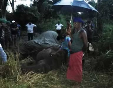 Elephant Collapses And Dies After Relentless Tourist Rides
