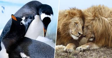 Same-Sex Relationships Take Place In Thousands Of Different Species