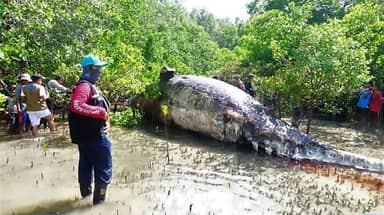 Giant Whale Found In Forest By Fishermen Who Don't Know How It Died
