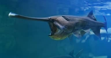 Giant Chinese Paddlefish First Species Of 2020 Declared Extinct