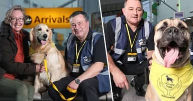 Therapy Dogs Arrive At UK Airports To Help Nervous Flyers