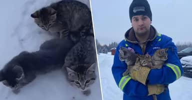 Oil Worker Uses Cup Of Coffee To Free Kittens Frozen To The Ground