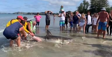 Great White Shark Kicked To Death By Group Of Men Who Took Selfies With It