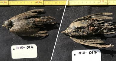 46,000-Year-Old Frozen Bird So Well Preserved Scientists Thought It 'Died Yesterday'