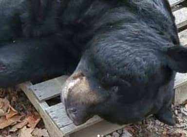 Killing Of 700-Pound Black Bear Sets North American Hunting Record