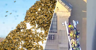 Swarm Of 40,000 Bees Attacked Pasadena Police Responding To Report Of Single Bee Sting
