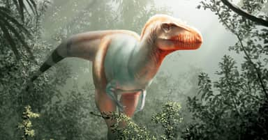 Scientists Discover T. Rex's Cousin With Features Unlike 'Anything We've Ever Seen'