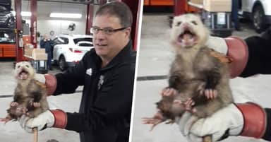 Customer Takes Car To Kentucky Mechanic, Discovers Opossum Living Under The Hood