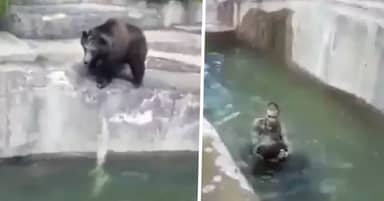 Horrifying Footage Shows Man Wrestling Bear In Water After Climbing Into Enclosure At Warsaw Zoo