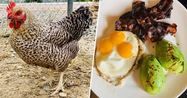 World's Luckiest Hen Lays Six Double Yolks And 'One-In-25-Million' Triple Yolk Egg