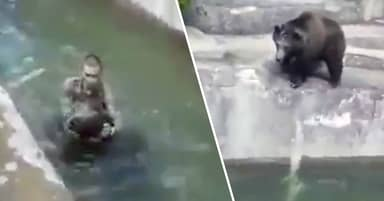 Drunk Man Who Fought With Bear In Warsaw Zoo Fined £6,000 For Not Wearing Mask