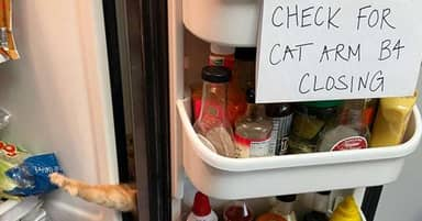 Sneaky Fridge-Raiding Cat Has No Idea His Family Is On To Him