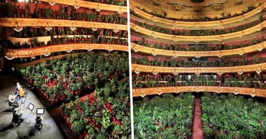 Barcelona Opera Reopens With Concert For More Than 2,000 Houseplants
