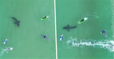 Boy Flying Drone Over Surfers In South Africa Captures Great White Shark Lurking Beneath