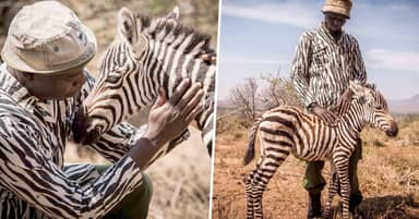 Keepers Dress In Zebra-Print Clothing To Become 'Surrogate Mum' For Orphaned Zebra
