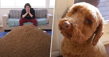 Guy Surprises His Dog With 1 Million Pieces Of Food