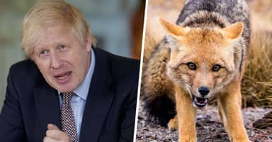 Boris Johnson Says He Loved Fox Hunting In A 'Semi-Sexual' Way