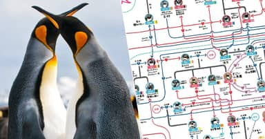 Japanese Aquarium Documents Busy Love Lives Of Its Penguins
