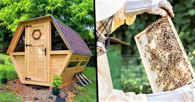 You Can Now Sleep In A Tiny Cabin That's Filled With Bees In Romania