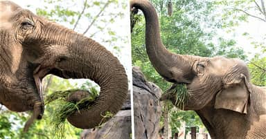 Warsaw Zoo Will Give Marijuana To Elephants To Reduce Their Stress