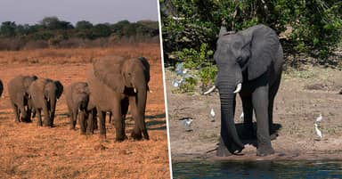 Zimbabwe Investigating Mysterious Deaths Of 11 Elephants