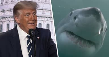 Trump Made A Bizarre Speech About Killing Off Sharks And Mosquitoes